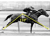 thoroughbred_horse